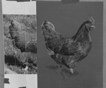 Chook by Sandra - Charcoal for Beginners