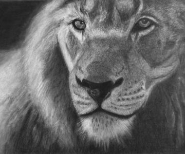 Lion by Helen - Charcoal for Beginners