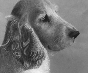 Setter by Bec - charcoal for Beginners